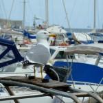 Seagull in the Harbour, Porto Maurizio